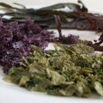 algues alimentaires dans une assiette