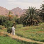 Oasis au Maroc